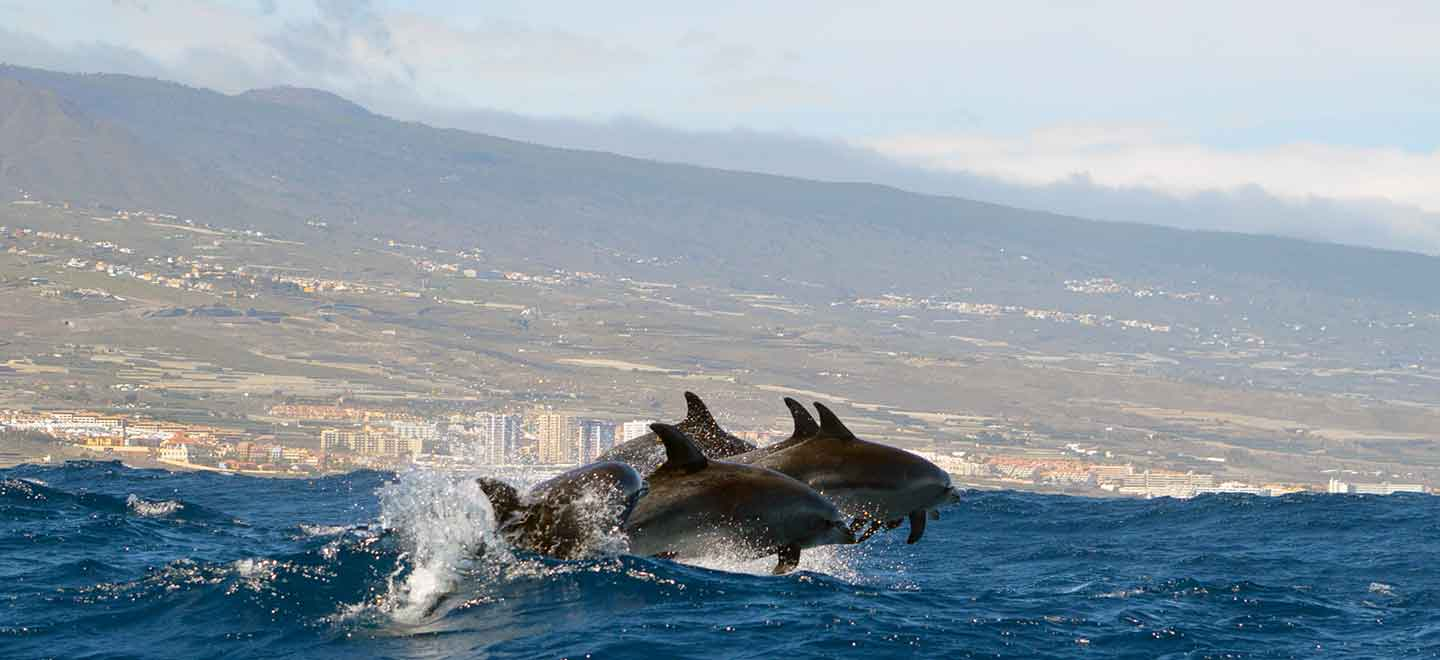 marine wildlife conservation is one of the key values of Whale Watch Tenerife
