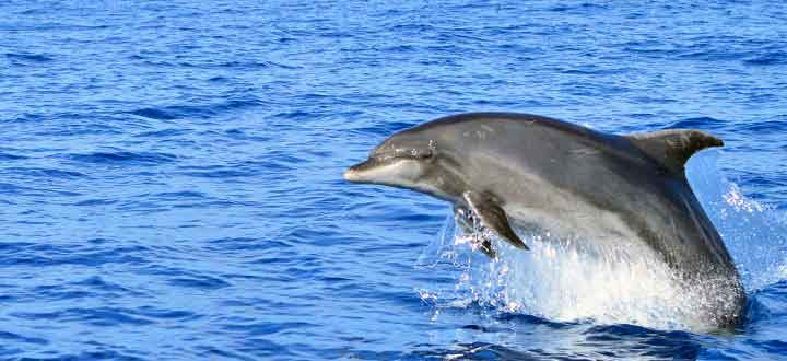 information on Bottlenose dolphins