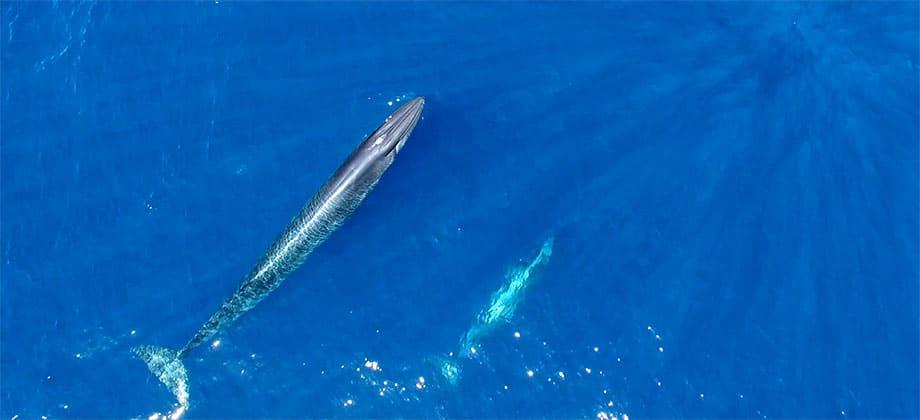 season for whale watching along Costa Adeje Tenerife