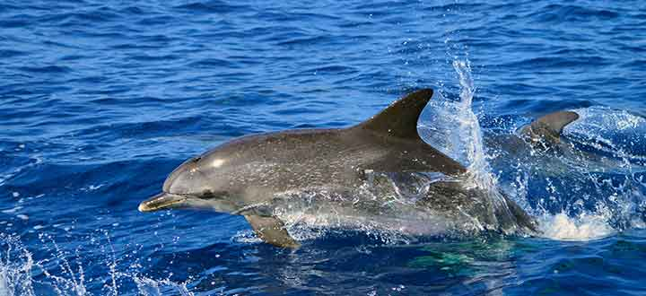 ethical whale watching tours Costa Adeje