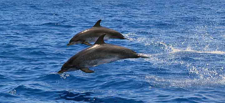 private whale and dolphin watching tours from Puerto Colón Marina Tenerife