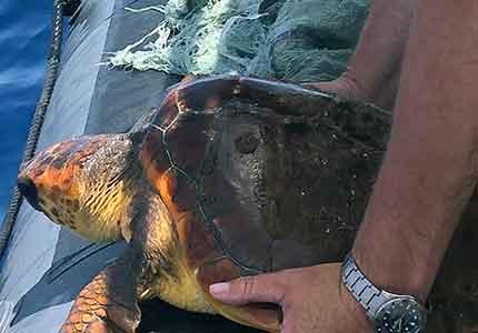marine wildlife conservation in Costa Adeje, Tenerife