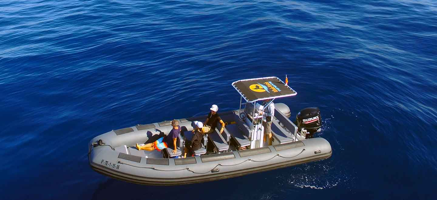 our certified blue flag whale and dolphin watching boat in Costa Adeje Tenerife