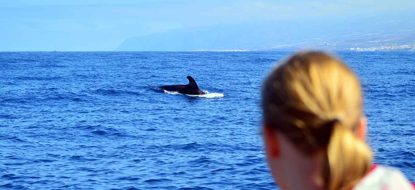 our sightings guarantee on whale and dolphin watching tours in Costa Adeje Tenerife