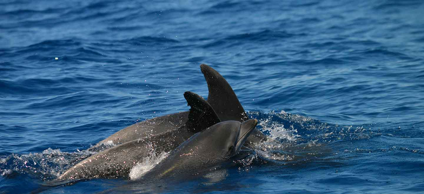 When is the best time during the Tenerife Whale watching season to see whales?