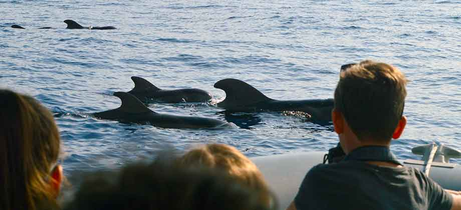 whale watching specialty tours Puerto Colón Tenerife