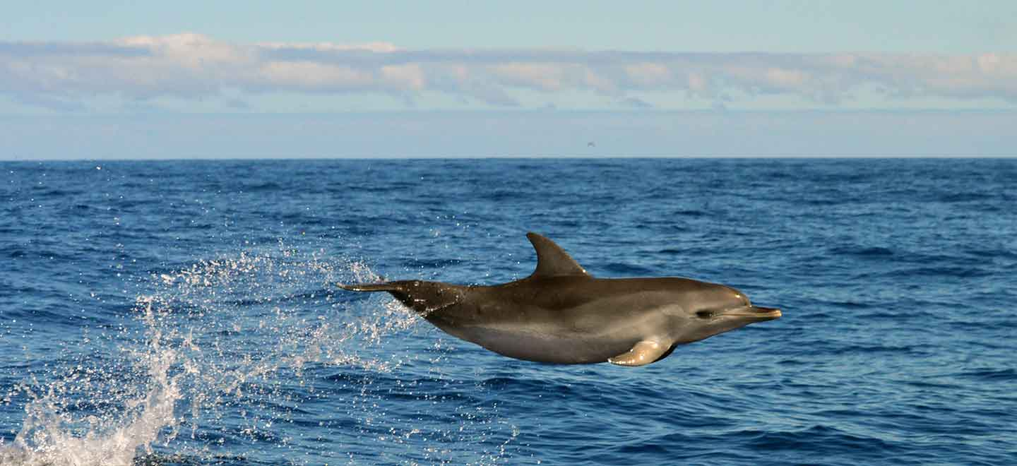 GDPR privacy policy of our whale and dolphin watching organisation in Costa Adeje, Tenerife